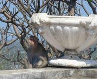 Affe und weißes Blumenbeet bei Khao Wang, alter Sommerpalast in Petchburi-Provinz Thailand Lizenzfreie Stockfotos