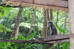 Affe unter dem Dach Stockfotos