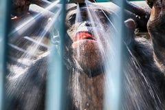 Affe unter der Dusche Stockfotografie