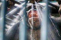 Affe unter der Dusche Stockbild