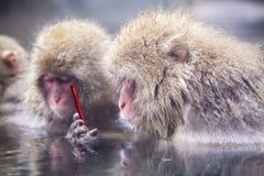 Affe unter Verwendung des Smartphonegraseninternets, das Social Media aktualisiert Stockbild