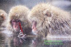 Affe unter Verwendung des Smartphonegraseninternets, das Social Media aktualisiert Stockbilder