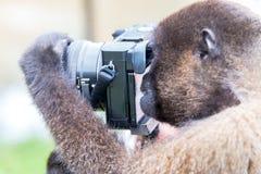 Affe unter Verwendung einer Kamera Stockfoto