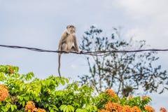 Affe versucht, auf die Drähte sorgfältig zu gehen Lizenzfreie Stockfotos