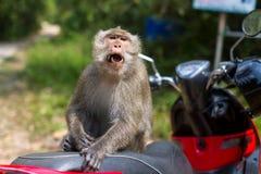 Affe verwirrte, sitzend auf einem Motorrad asien Lizenzfreies Stockfoto