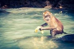 Affe vom Affe-Strand in Thailand Lizenzfreies Stockbild