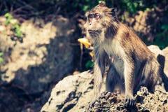 Affe vom Affe-Strand in Thailand Lizenzfreie Stockbilder