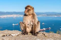 Affe von Gibraltar Stockfotografie