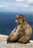 Affe von Gibraltar Lizenzfreies Stockbild