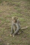 Affe von wildem Lizenzfreies Stockbild
