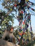 Affe vor Flaggen, Nepal Stockbilder