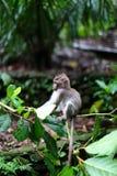 Affe-Wald, Ubud, Bali lizenzfreies stockbild