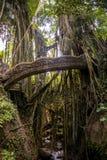 Affe-Waldbrücke Tempel Balis Indonesien Ubud Lizenzfreie Stockbilder