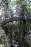 Affe-Waldliane-Brücke Tempel Balis Indonesien Ubud Lizenzfreies Stockfoto