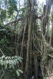 Affe-Waldliane-Brücke Tempel Balis Indonesien Ubud Lizenzfreie Stockfotografie
