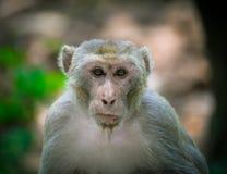 Affe-wild lebende Tiere Stockfotografie
