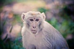 Affe-wild lebende Tiere Lizenzfreie Stockbilder
