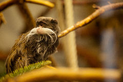 Affe Wilhelma-Zoo in Stuttgart Lizenzfreies Stockfoto