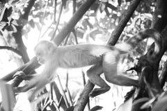 Affeaktion tief innerhalb des Dschungels Stockfoto