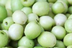 Affeapfel, grüne Frucht in Thailand Lizenzfreies Stockbild