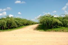 Affeapfel- oder -jujubebäume im Garten Lizenzfreie Stockfotos