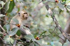 Affeblicklebensmittel auf Baum Stockfotografie