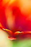 Affection. Floral abstract , shaped and define by little lines and vivid colors Stock Image