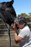 Affection with Horse Stock Image