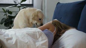 Affectionate licking dog awakening female owner