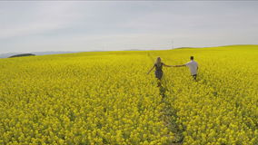 Affectionate man and woman holding hands while running on oilseed farm. High angle footage of couple embracing on field.Tracking shot of affectionate man and stock video footage
