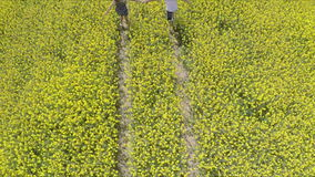 Affectionate man and woman holding hands while running on oilseed farm. High angle footage of couple embracing on field.Tracking shot of affectionate man and stock footage