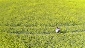 Affectionate man and woman holding hands while running on oilseed farm. High angle footage of couple embracing on field.Tracking shot of affectionate man and stock video