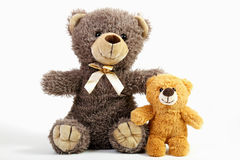 Affectionately together. Two loving teddy bears on white background Royalty Free Stock Image