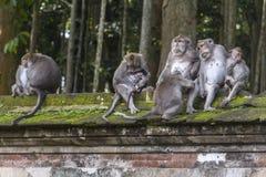 Affefamilie auf Bali Lizenzfreie Stockfotos