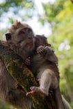 Affefamilie auf dem Baum Stockfotografie