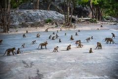 Affefamilie auf hohem Berg in Thailand Lizenzfreies Stockbild