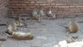 Affefamilie bei Phra Prang Samyod Lizenzfreie Stockfotos