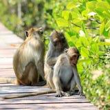 Affefamilie in der Natur Stockbilder