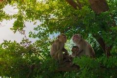 Affefamilie, die auf dem Baum zusammenlebt Stockfotos