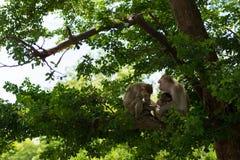 Affefamilie, die auf dem Baum zusammenlebt Lizenzfreies Stockfoto