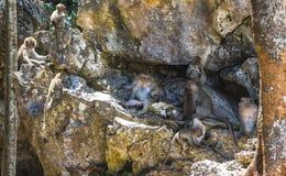 Affefamilie, die auf Steinen sich entspannt Lizenzfreie Stockfotografie