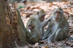 Affefamilie, die in Thailand sich entspannt Lizenzfreie Stockfotos