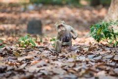 Affefamilie, die in Thailand sich entspannt Lizenzfreies Stockfoto