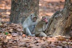 Affefamilie, die in Thailand sich entspannt Lizenzfreie Stockfotografie