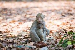 Affefamilie, die in Thailand sich entspannt Lizenzfreie Stockbilder