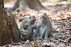Affefamilie, die in Thailand sich entspannt Stockfoto