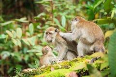 Affefamilie, die um jeden anderen sich kümmert Lizenzfreie Stockfotografie