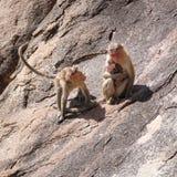 Affefamilie im Berg Lizenzfreie Stockfotografie