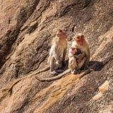 Affefamilie im Berg Stockbilder