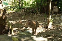 Affefamilie im Dschungel Stockfotos